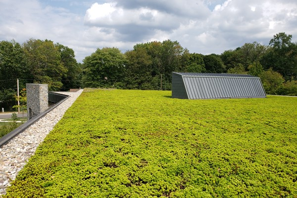 Library Green Roof